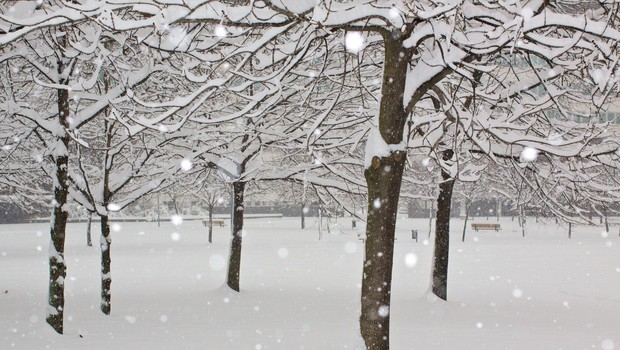 Sneg in nizke temperature po Evropi ovirajo promet in ogrožajo tako ljudi kot živali (foto: profimedia)