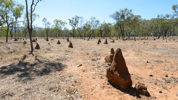 Avstralija zabeležila najtoplejši januar v zgodovini meritev! (foto: profimedia)