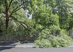 Na severovzhodu Slovenije močan veter podiral drevesa, ponehal bo proti jutru