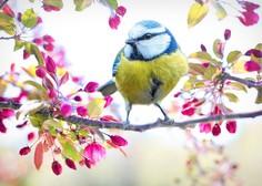 12. marec - Ptički se ženijo!