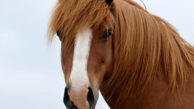 Slovensko javnost je vznemiril nov primer trpinčenih živali (foto: profimedia)