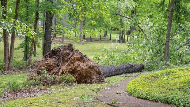 Močan veter povzročal številne nevšečnosti po državi (foto: Profimedia)
