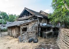 V Vietnamu izbruh afriške prašičje kuge