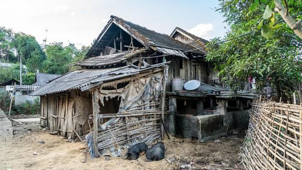 V Vietnamu izbruh afriške prašičje kuge (foto: profimedia)