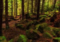 Rudi Beiser o izjemni zdravilni moči dreves, medtem pa brazilski pragozd še vedno gori!