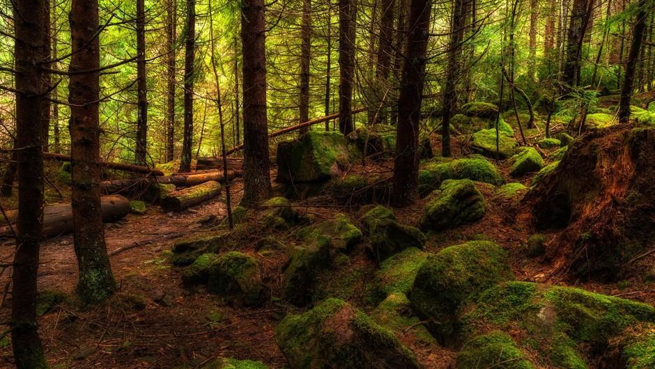 Rudi Beiser o izjemni zdravilni moči dreves, medtem pa brazilski pragozd še vedno gori! (foto: Profimedia)