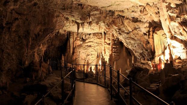 Razlog več za obisk Postojnske jame: Na ogled tudi mladički človeške ribice! (foto: profimedia)