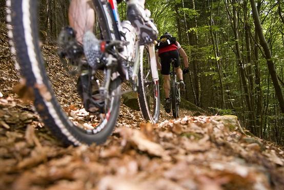 Kolesarjenje po gozdu naj bo le po utrjenih poteh, opozarja mariborska policija