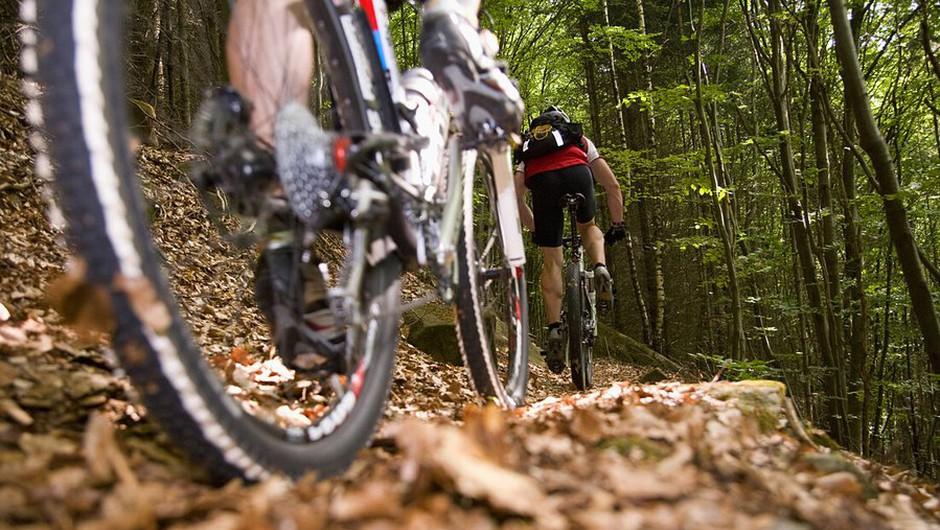 Kolesarjenje po gozdu naj bo le po utrjenih poteh, opozarja mariborska policija (foto: profimedia)