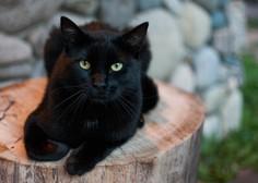 Pozabite na srednjeveško vraževerje! Ni srečnega doma brez črne mačke!