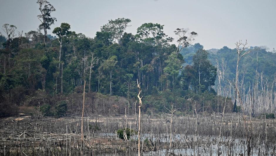 Požar v Amazoniji, Greta, njeni kritiki in opustošenje, ki se dogaja pred našimi očmi! (foto: Carl De Souza/Afp/Profimedia)