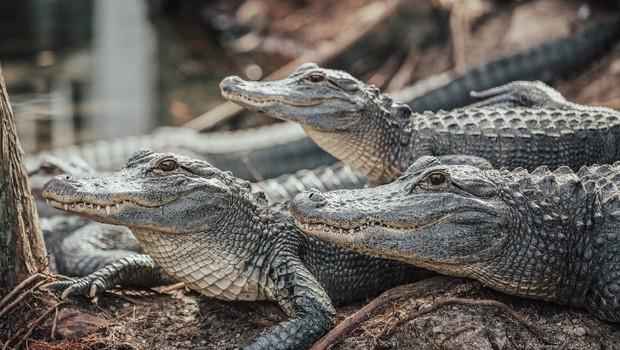 Vplivneži v Sloveniji: Majhna mlaka, polna krokodilov (foto: Unsplash)