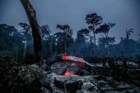 V Amazoniji izginilo največ deževnega gozda po letu 2008, v dimu tudi avstralski Sydney!