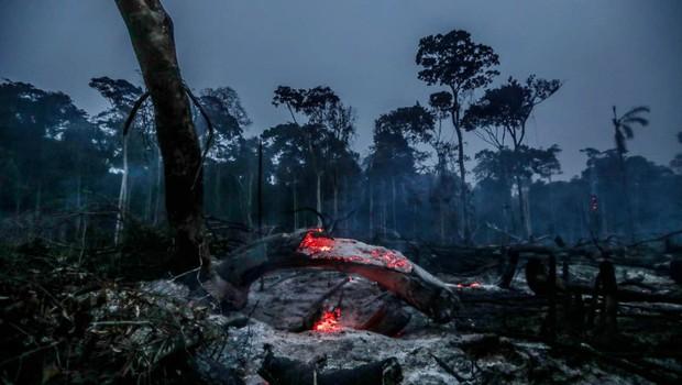 V Amazoniji izginilo največ deževnega gozda po letu 2008, v dimu tudi avstralski Sydney! (foto: profimedia)