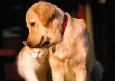 Živali niso več stvari, temveč živa, a ne tudi čuteča bitja, pravi vlada!