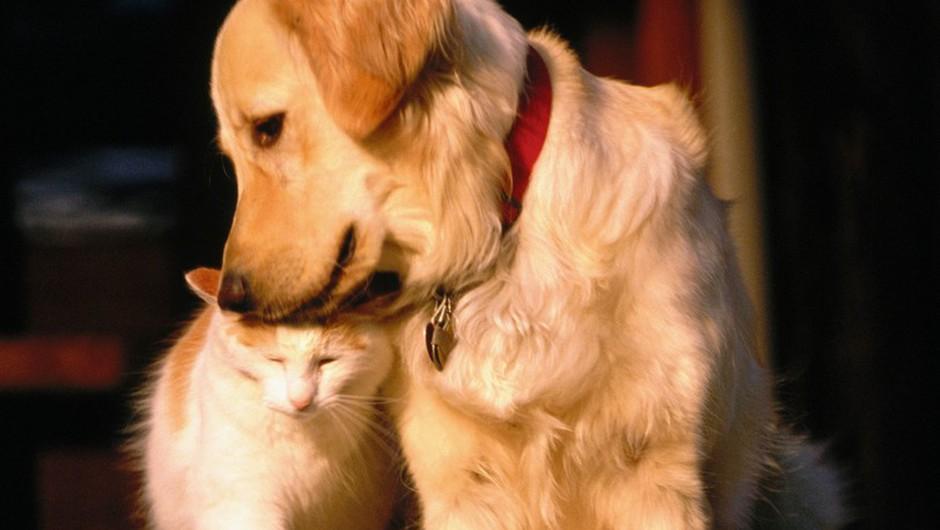 Živali niso več stvari, temveč živa, a ne tudi čuteča bitja, pravi vlada! (foto: profimedia)