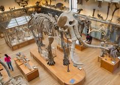 Naši predniki so bili bolj premišljeni lovci na mamute, kot se je mislilo doslej
