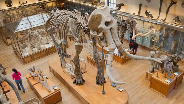 Naši predniki so bili bolj premišljeni lovci na mamute, kot se je mislilo doslej (foto: profimedia)