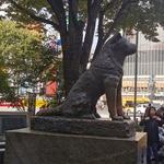 Hachiko, simbol zvestobe, Shibuya, Tokio (foto: Maja Fister)