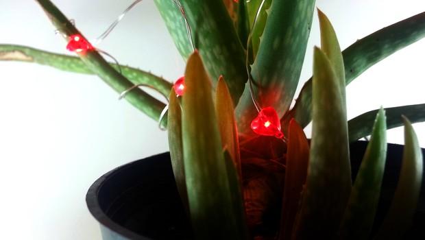 Zatočišče za zavržene rastline - eksperiment z naravnimi elementi v dotrajanem prostoru! (foto: Zeleno zatočišče Press)
