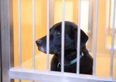 V zavetišču za zapuščene živali odprli nove prostore za živali v stiski
