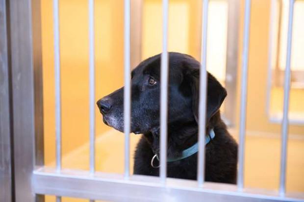 V zavetišču za zapuščene živali odprli nove prostore za živali v stiski (foto: Nebojša Tejić/STA)
