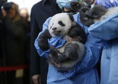 Mladi pandi v berlinskem živalskem vrtu dobili prav posebna imena