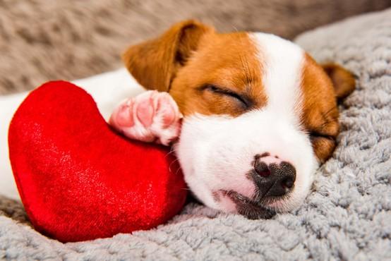 Društvo za zaščito živali: Domača žival je odgovornost, ne pa darilo!
