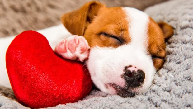 Društvo za zaščito živali: Domača žival je odgovornost, ne pa darilo! (foto: profimedia)