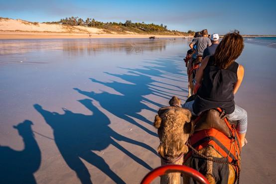 V Avstraliji bodo pobili več tisoč kamel, ki zaradi suše vdirajo v vasi