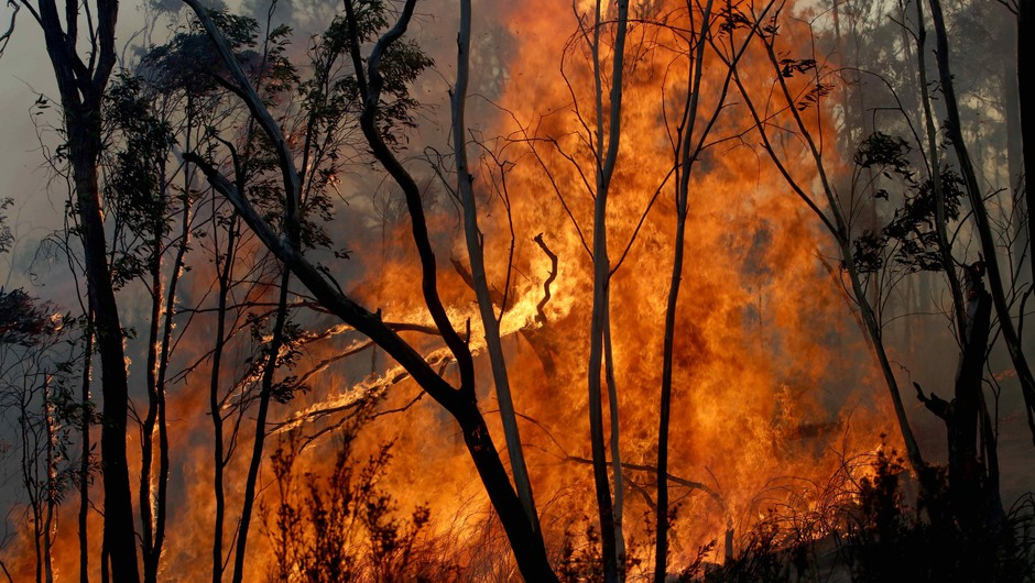 V Avstraliji s pomočjo dežja ukrotili megapožar (foto: profimedia)