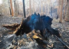 Avstralija spet vsa v požarih, med gašenjem strmoglavilo letalo