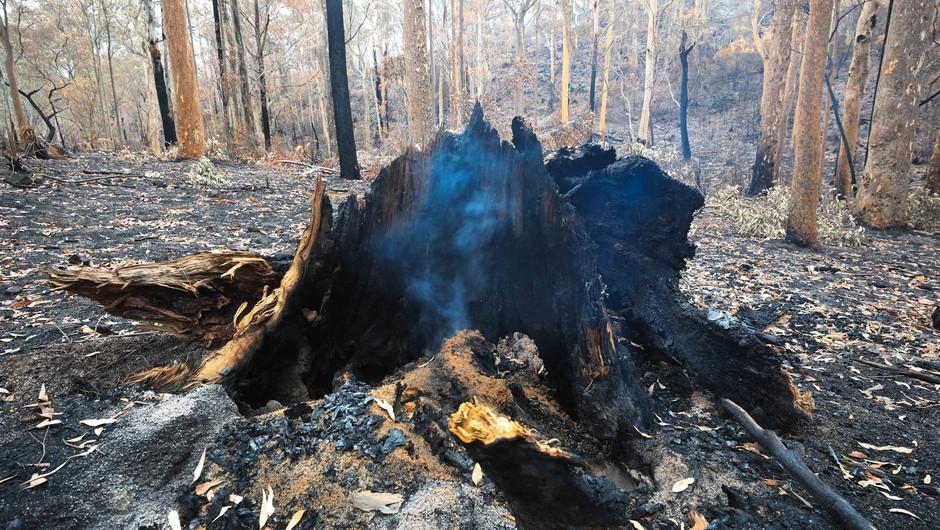 Avstralija spet vsa v požarih, med gašenjem strmoglavilo letalo (foto: profimedia)