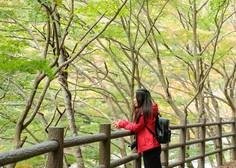 O šinrin-joku ali japonski gozdni kopeli (in nje zdravilnih učinkih)