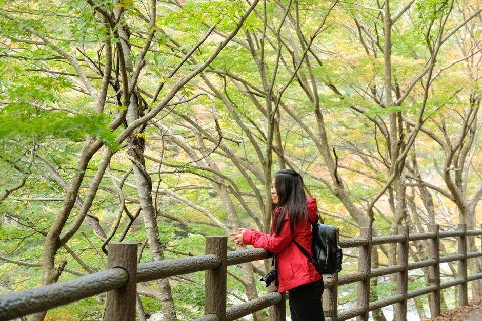 O šinrin-joku ali japonski gozdni kopeli (in nje zdravilnih učinkih) (foto: profimedia)