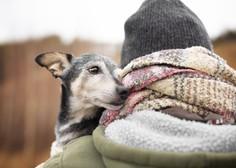 Modrost starih psov (ali česa vse se lahko naučimo od pasjih starčkov)