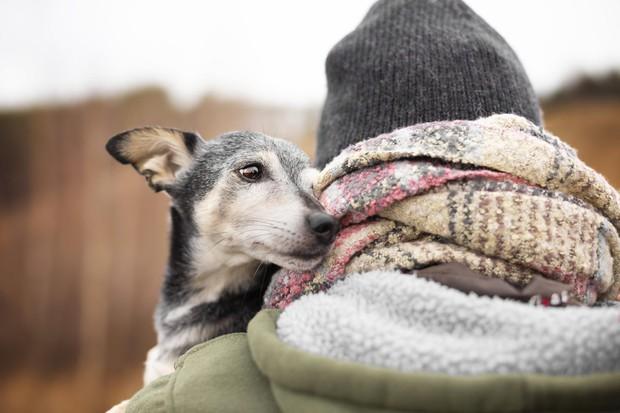 Modrost starih psov (ali česa vse se lahko naučimo od pasjih starčkov) (foto: profimedia)