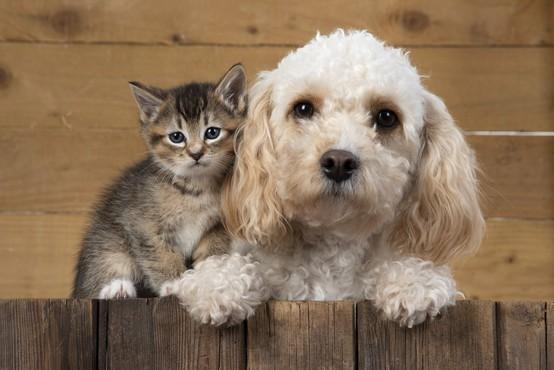 Odbor DZ za opredelitev živali kot čutečih živih bitij