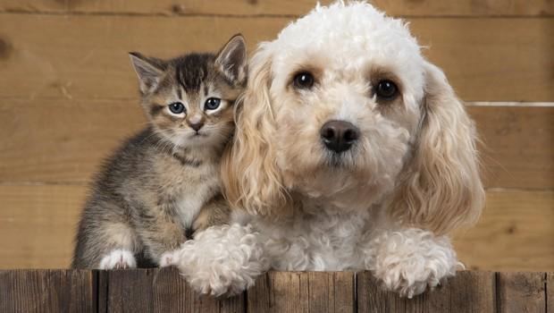 Odbor DZ za opredelitev živali kot čutečih živih bitij (foto: profimedia)