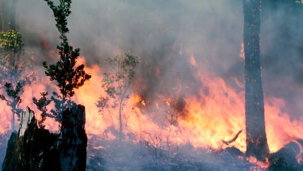 Nova svarila pred posledicami podnebnih sprememb (foto: profimedia)