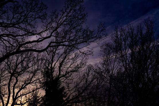 Močan veter je tokrat prizanesel koroškim gozdovom