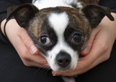 V EP so izglasovali poziv za ustavitev nezakonite trgovine z mačkami in psi