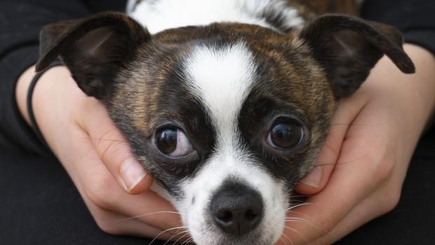 V EP so izglasovali poziv za ustavitev nezakonite trgovine z mačkami in psi (foto: profimedia)