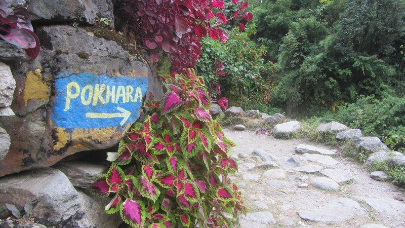 Treking v bazni tabor Annapurne v večji meri poteka po deževnem gozdu.