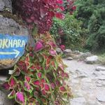 Treking v bazni tabor Annapurne v večji meri poteka po deževnem gozdu. (foto: Nika Arsovski)