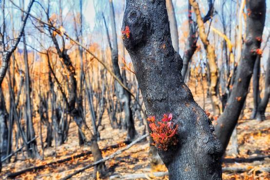 Požari so prizadeli kar 75 odstotkov Avstralcev, kažejo raziskave