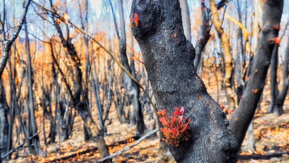 Požari so prizadeli kar 75 odstotkov Avstralcev, kažejo raziskave (foto: profimedia)
