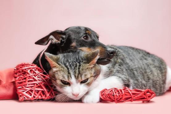 Hišni ljubljenčki naj bi bili varni pred novim koronavirusom