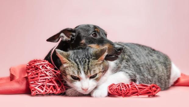 Hišni ljubljenčki naj bi bili varni pred novim koronavirusom (foto: profimedia)