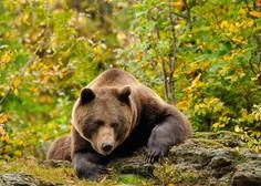Ostro nasprotovanje odstrelu medvedov in volkov